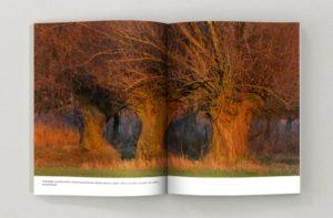 Sekrestne życie drzew, wnętrze książki